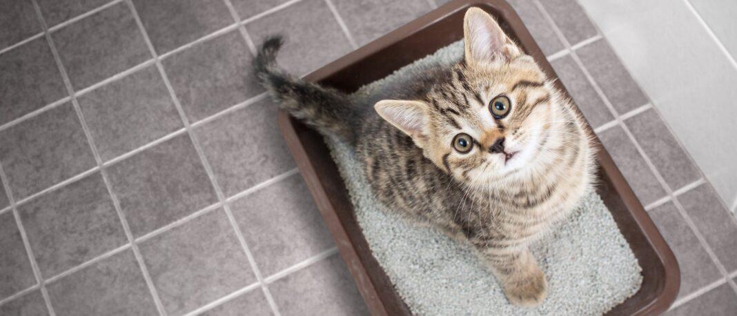 Alternativas a la arena para gatos