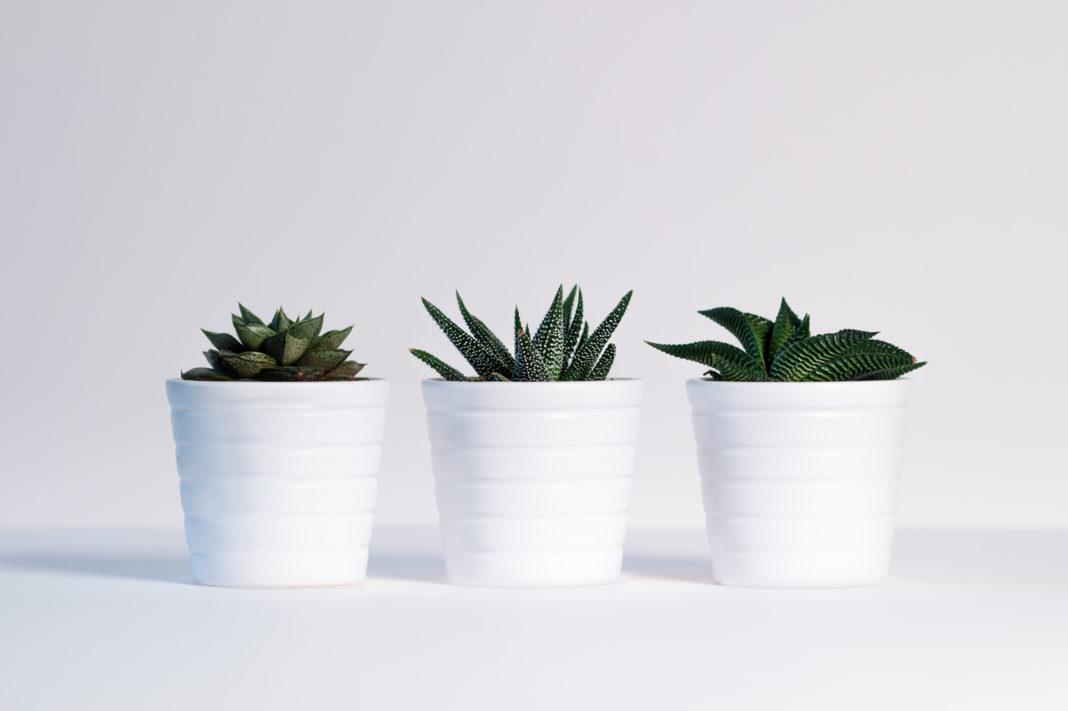 Plantas en espacio pequeño